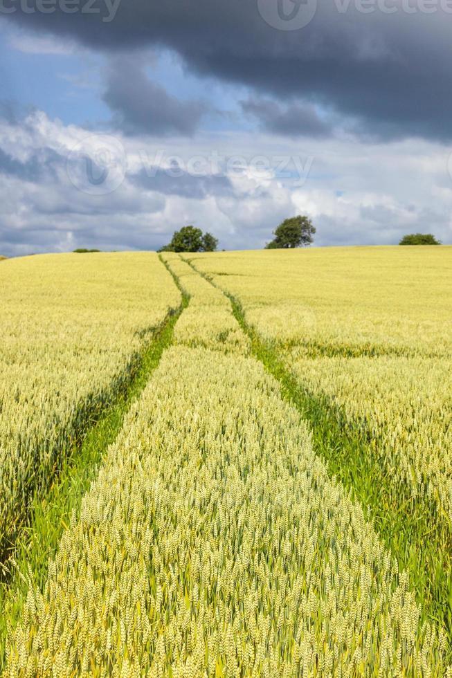 vista del paisaje rural foto