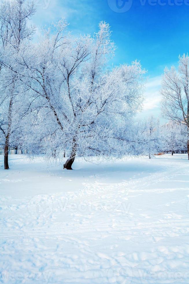 Snowy Winter Landscape photo