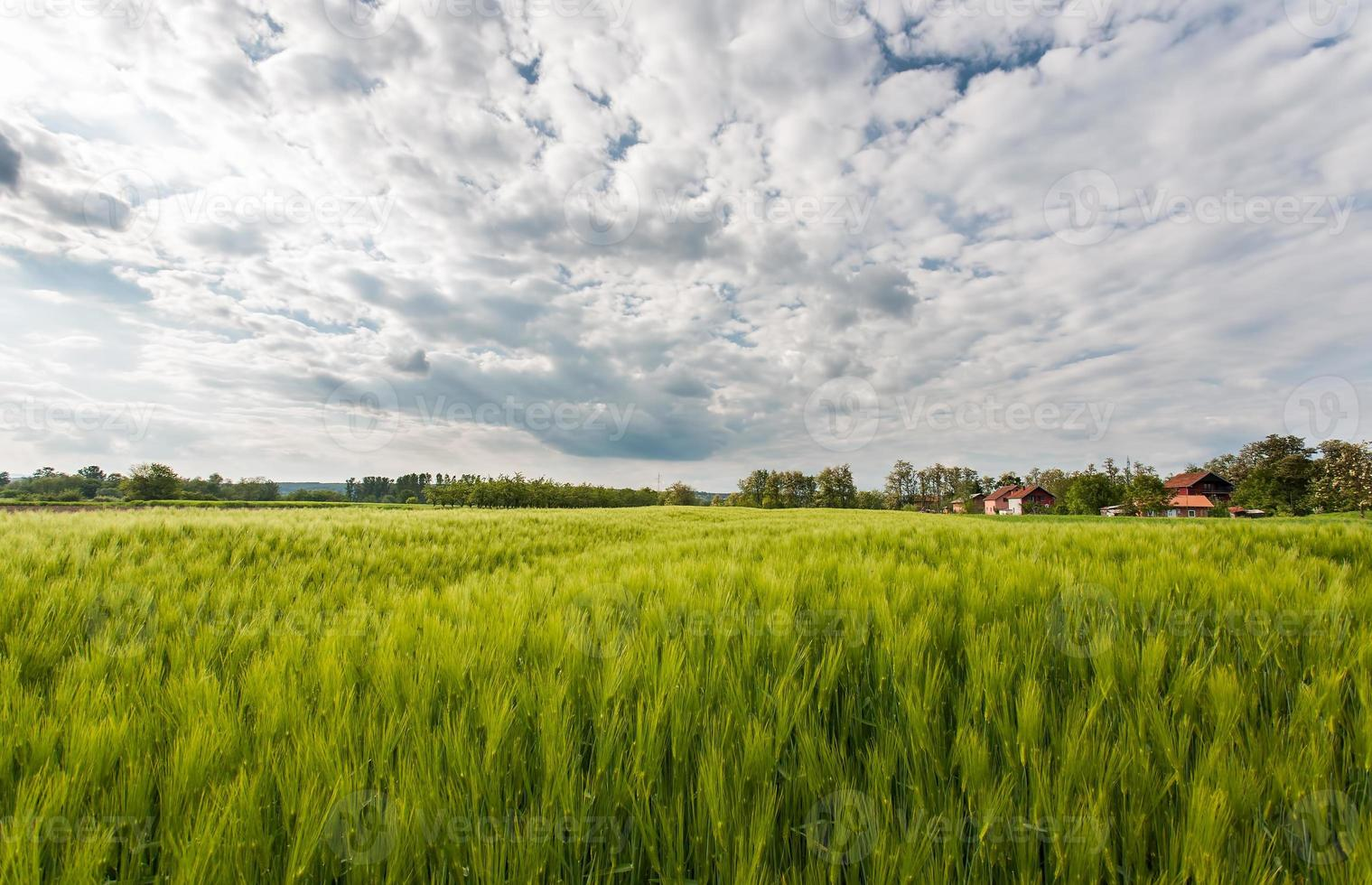 panorama del paisaje rural foto