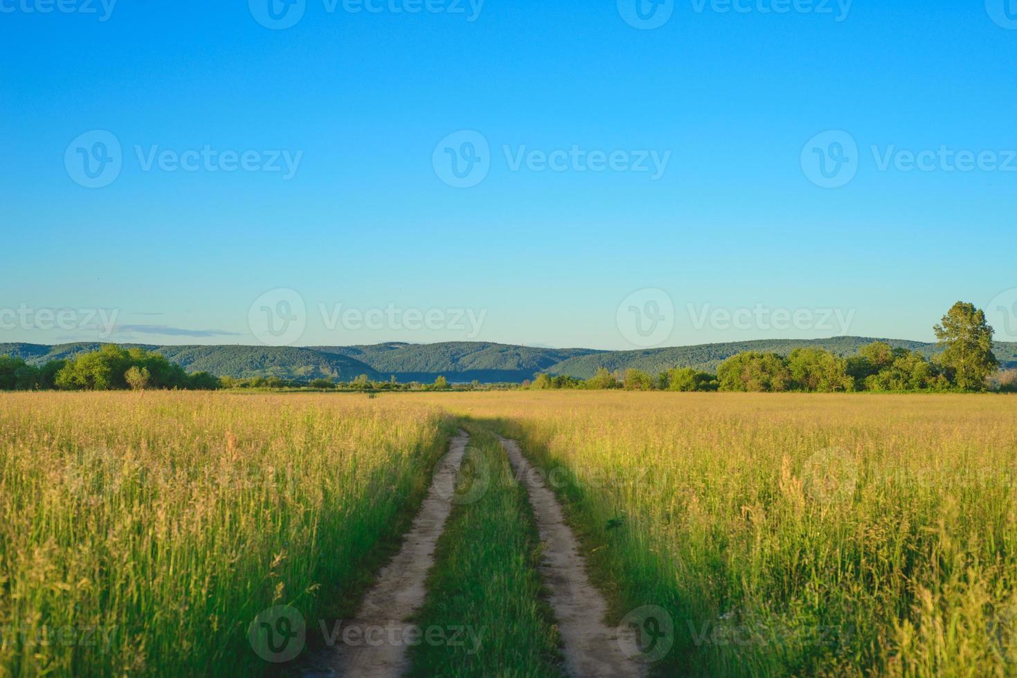 Peaceful summer rural landscape photo