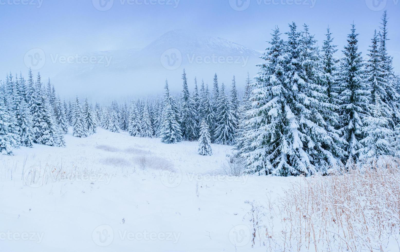 wonderful winter landscape photo