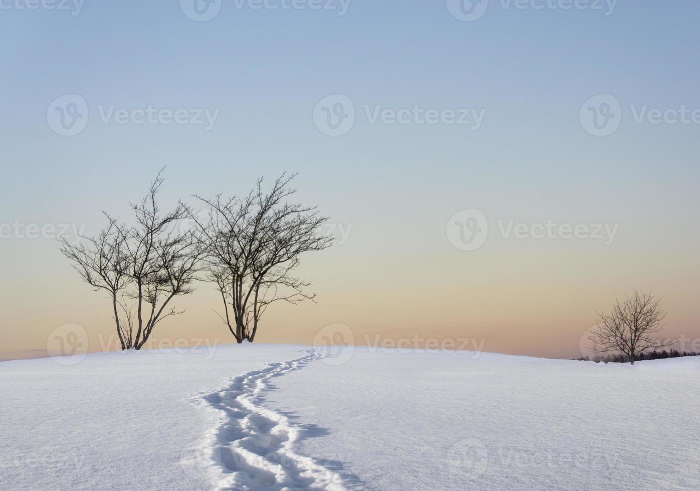 Bare trees in winter landscape photo