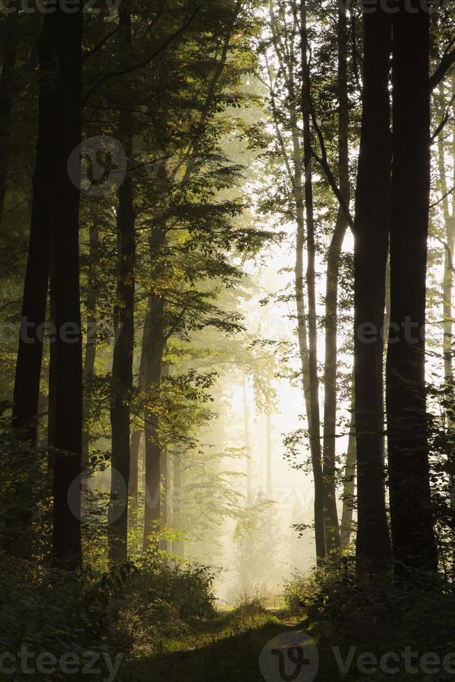 Landscape of misty deciduous forest photo