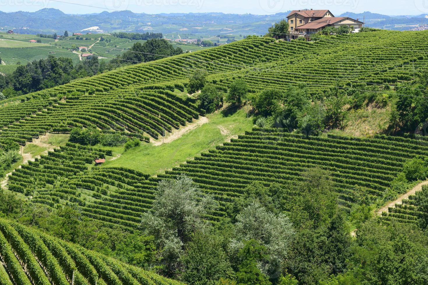 Summer landscape in Langhe (Italy) photo