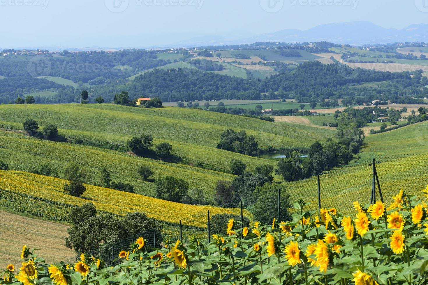 Summer landscape in Marches (Italy) photo