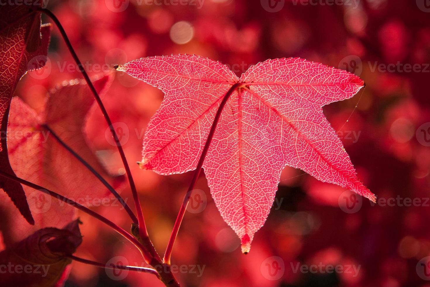 fuego de otoño foto