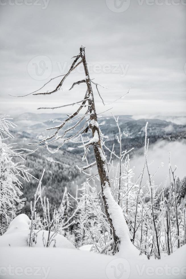 caminata de invierno foto