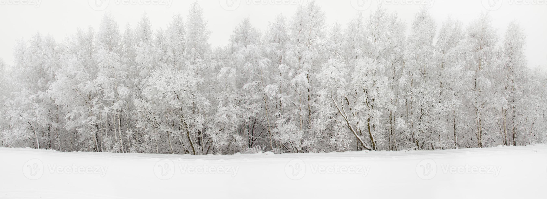 madera de invierno foto