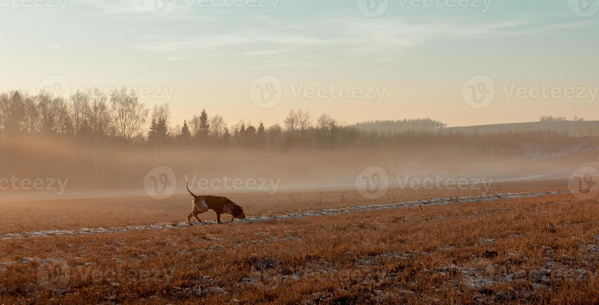 Autumn landscape with a hunting dog. photo