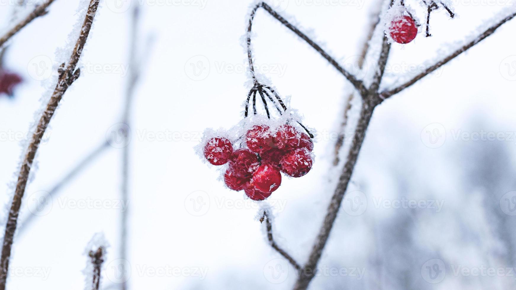 baies d'hiver photo