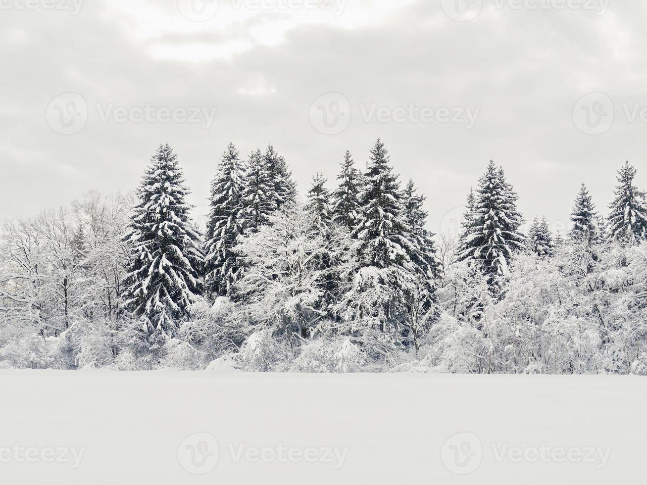 paisaje de nieve invierno foto