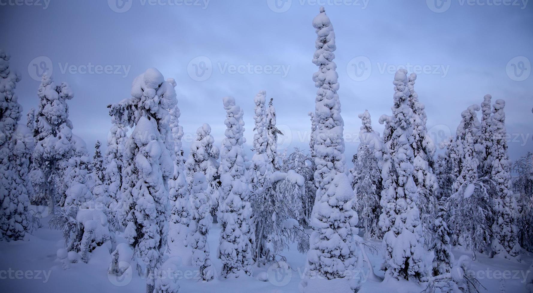 puesta de sol en bosque de invierno foto
