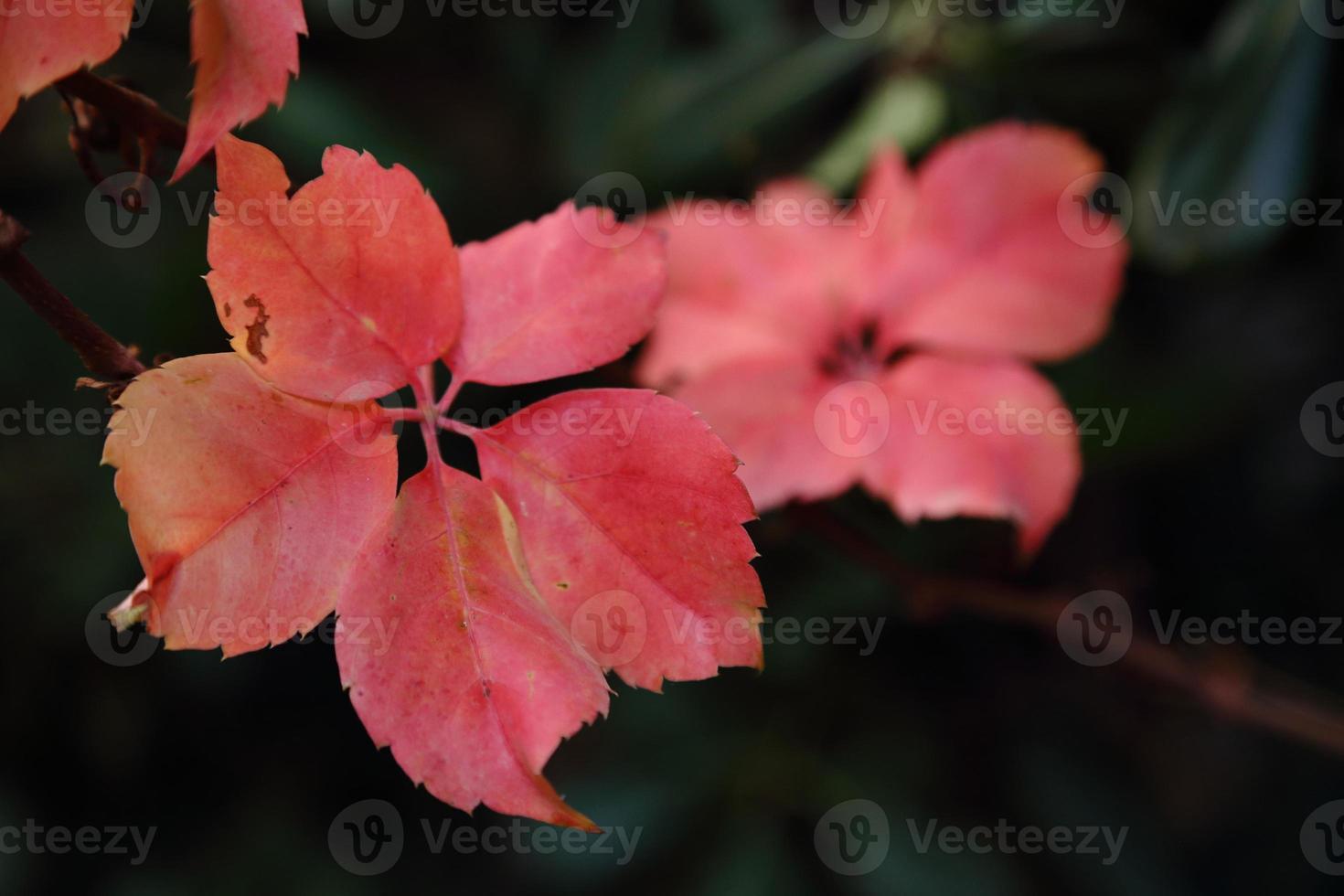 hojas en invierno foto