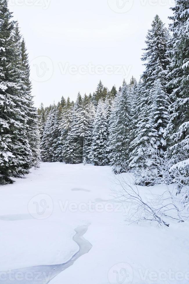 The winter creek photo
