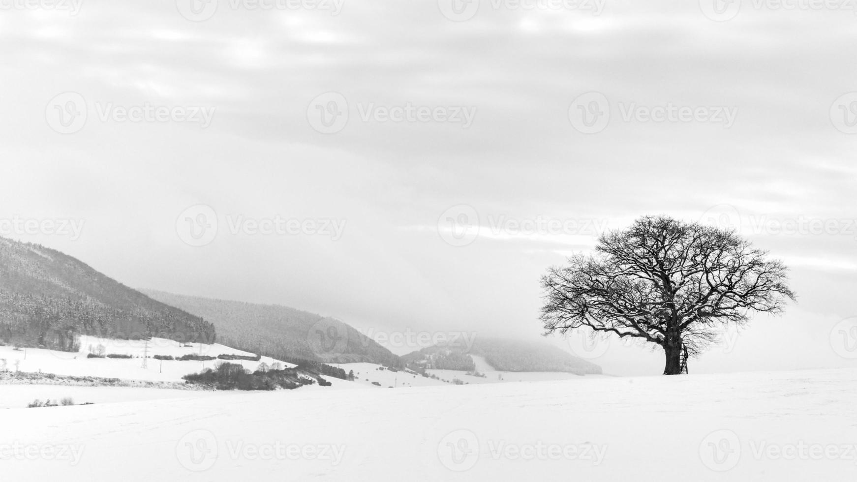 el solitario árbol de invierno foto