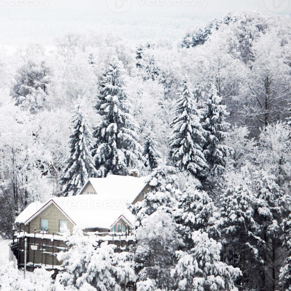Winter forest with snow photo