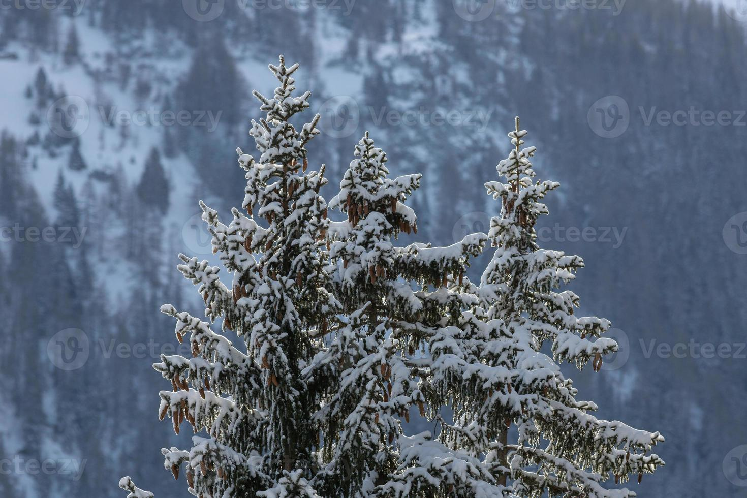 Winter in the Alps photo