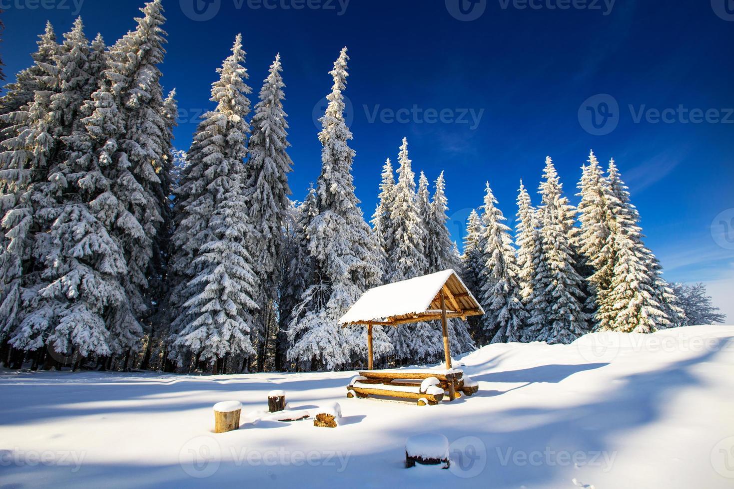 árbol mágico de invierno cubierto de nieve foto