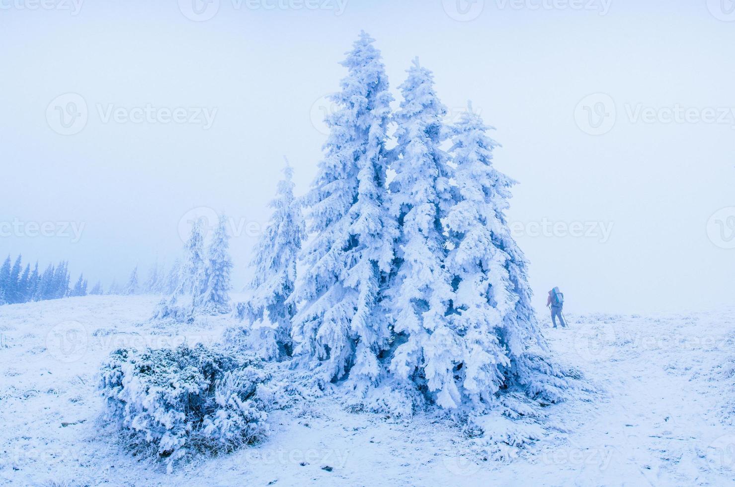 magischer Winter schneebedeckter Baum foto