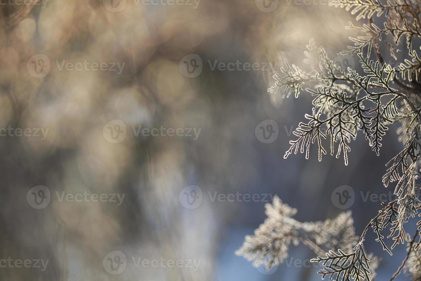 Winter framework .Frozen tree branch photo