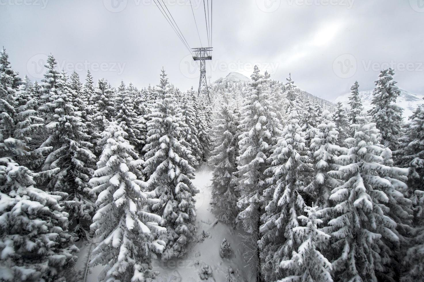 Snow covered path during winter photo