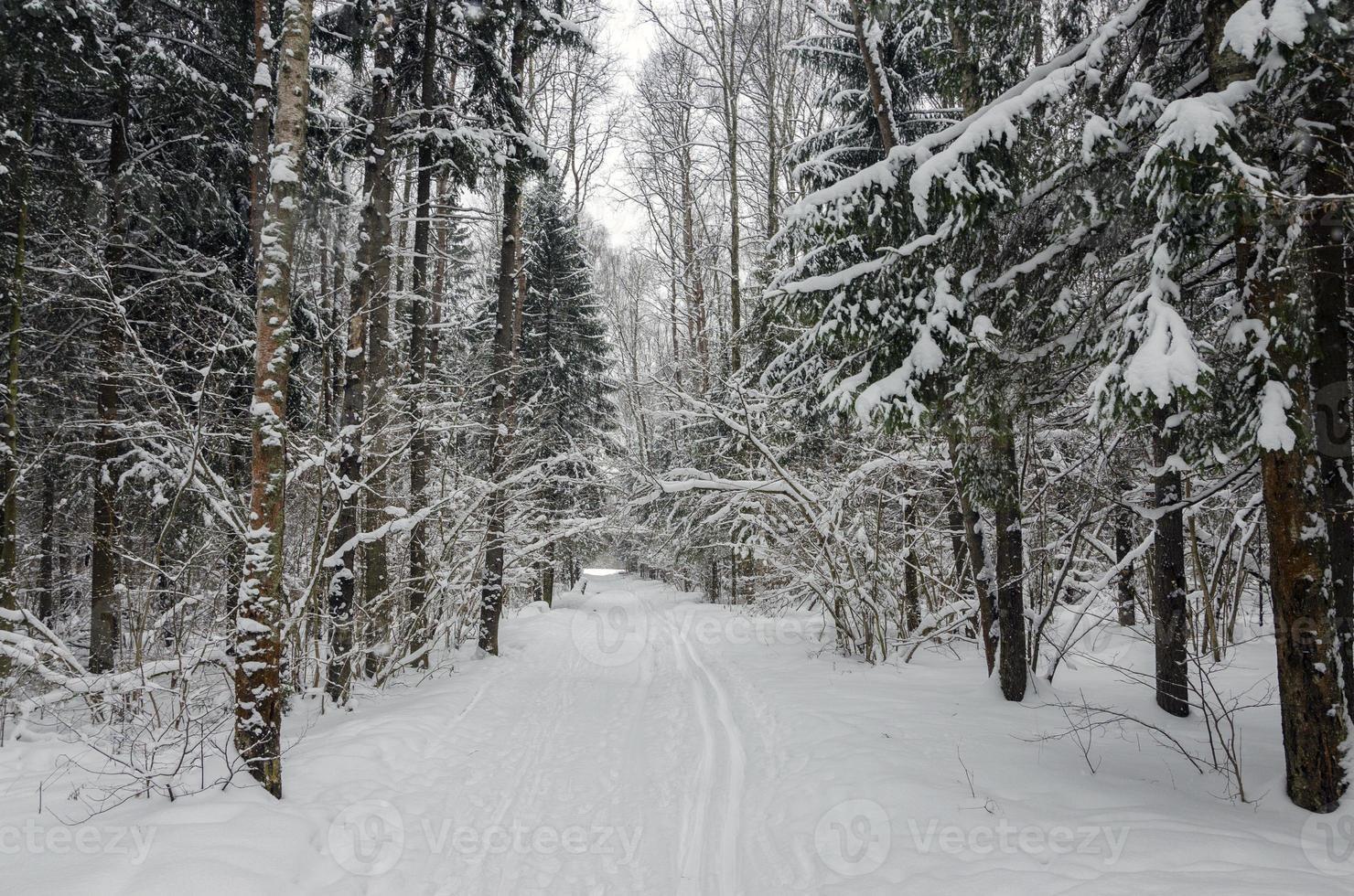 camino en bosque de invierno foto