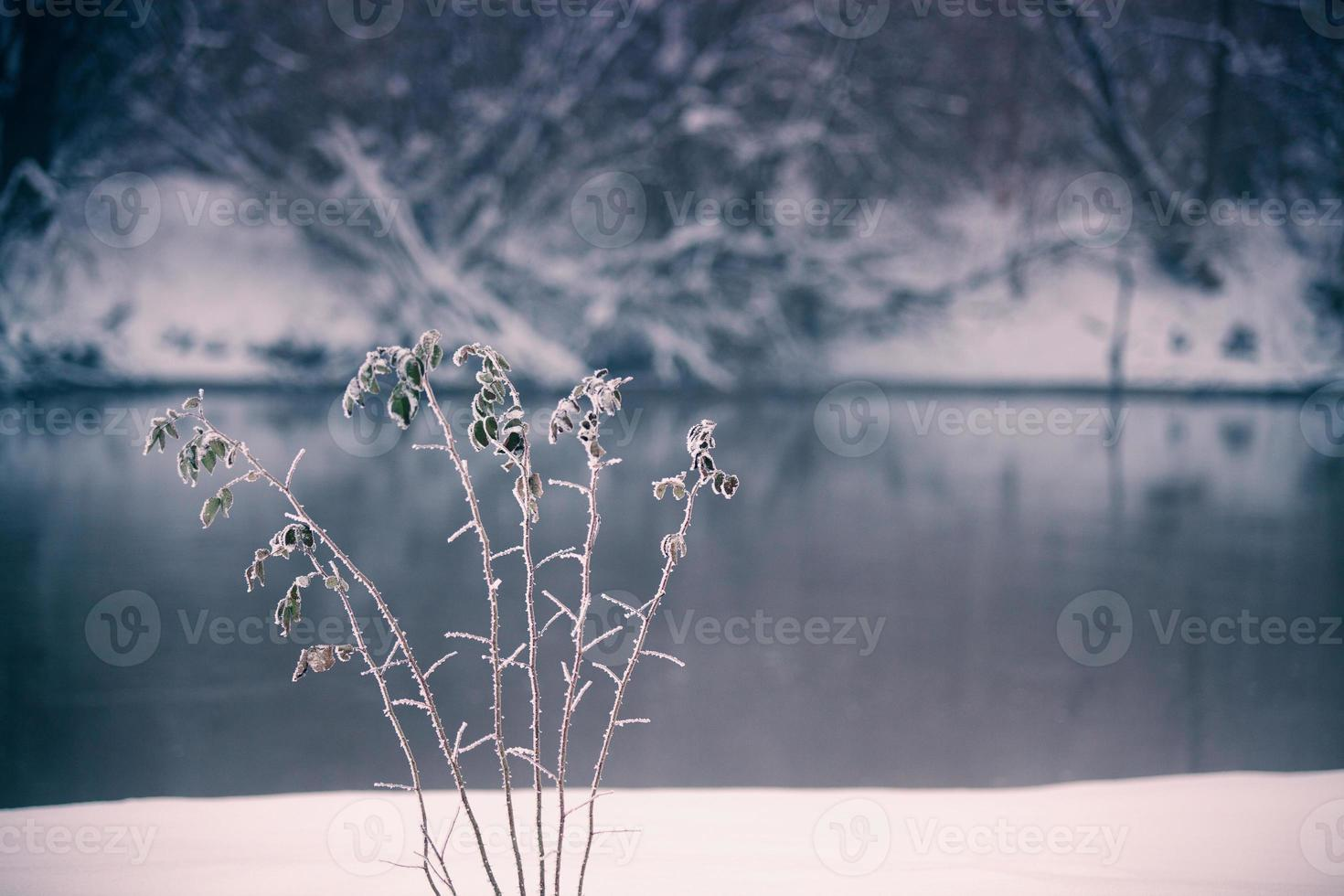 Snow and winter. Belarus village, countryside in winter photo