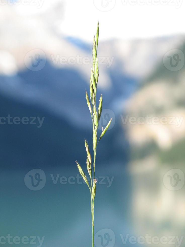 punta de hierba única foto
