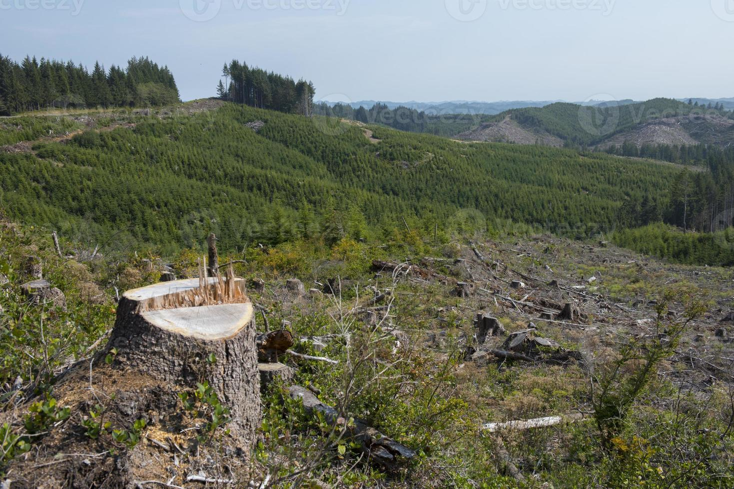 Clear cut forest, signs of reforestation photo