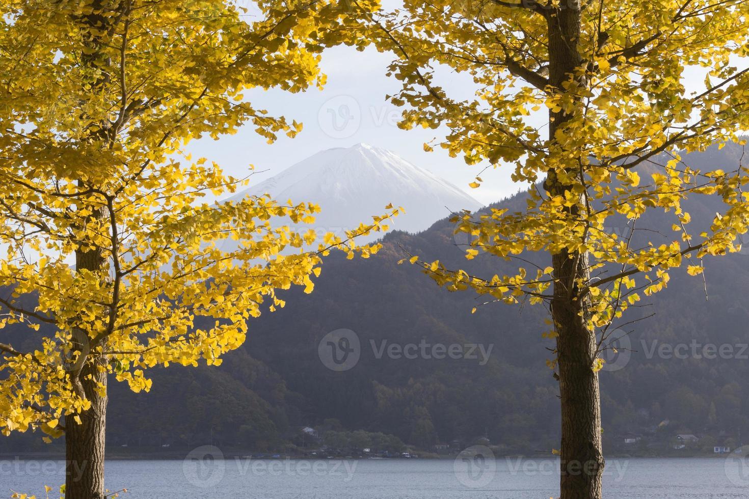 hojas de ginkgo y monte fuji, japón foto