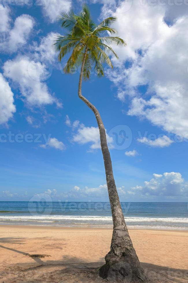 playa tropical palmera trinidad y tobago bahía de maracas foto
