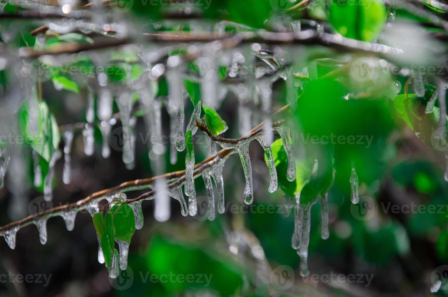 hoja congelada foto