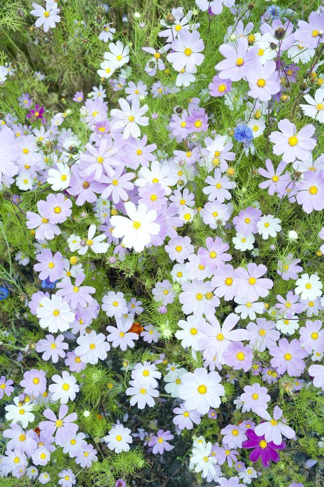 Wild flowers blooming photo