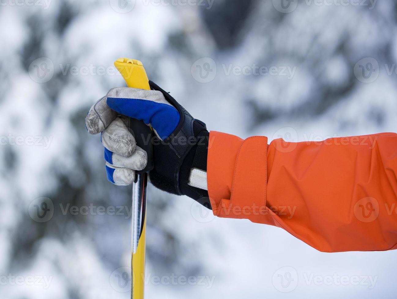 Hand and Ski Pole photo
