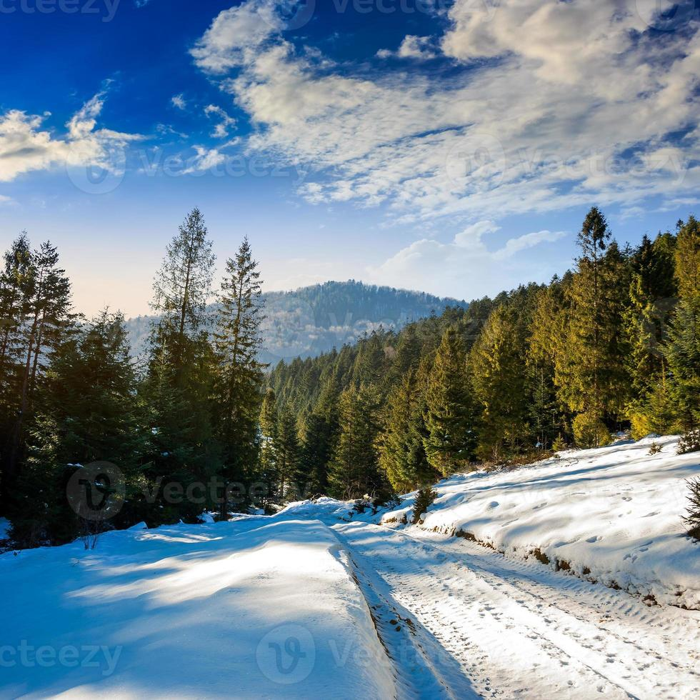snowy road to coniferous forest in mountains photo