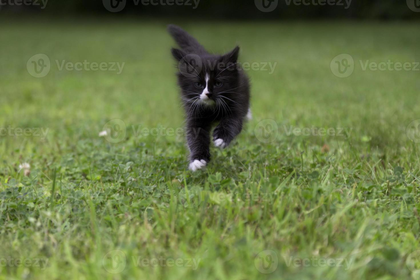 Running Kitty photo