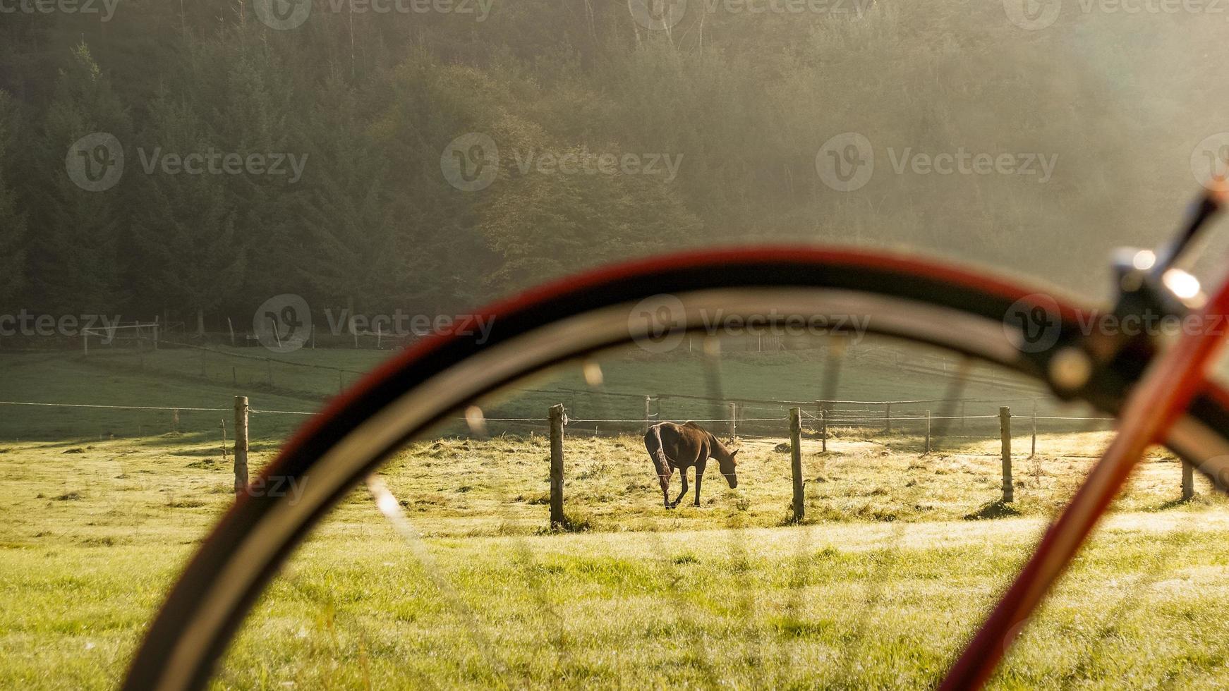 Horse and Bike photo