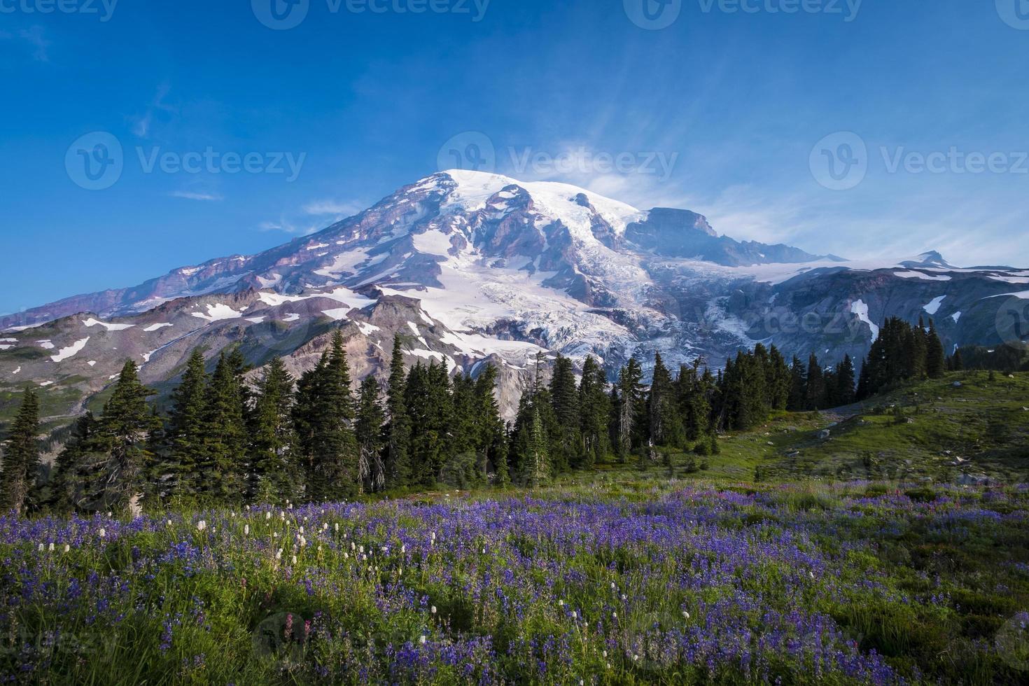 Beautiful wildflowers and Mount Rainier photo