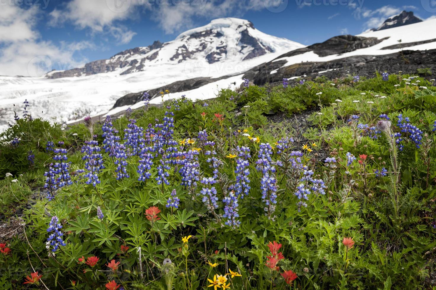Mt. Baker Wildflowers photo