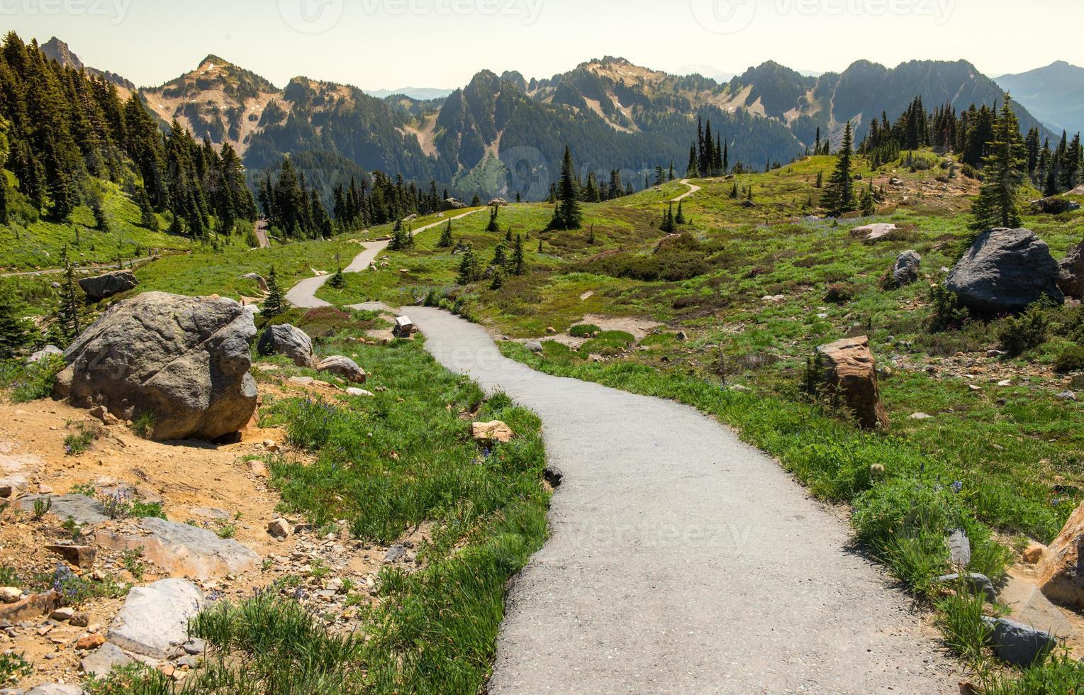 Paradise Trail Mt. Rainer photo