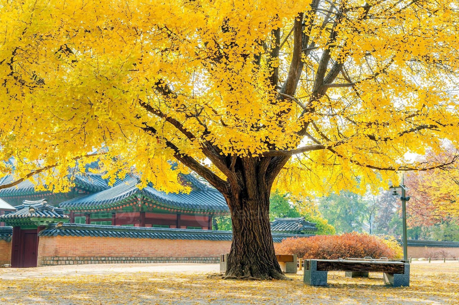 otoño en el palacio gyeongbukgung, corea. foto