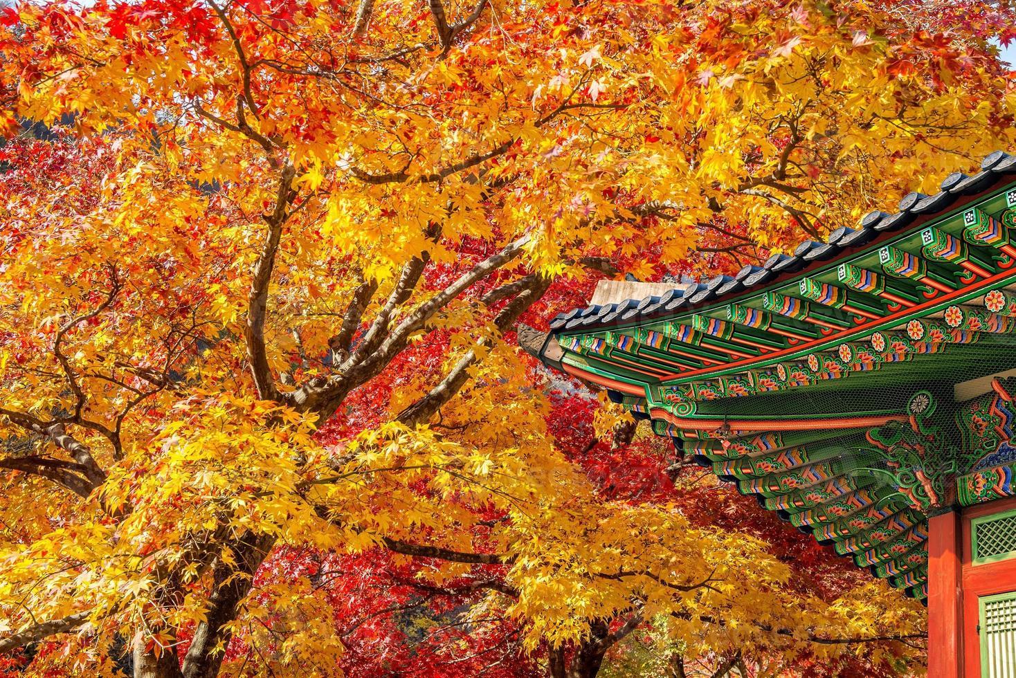 techo de gyeongbukgung y arce en otoño en Corea. foto