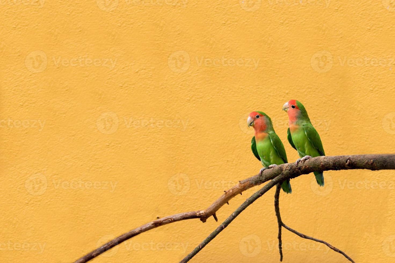 pájaros del amor foto