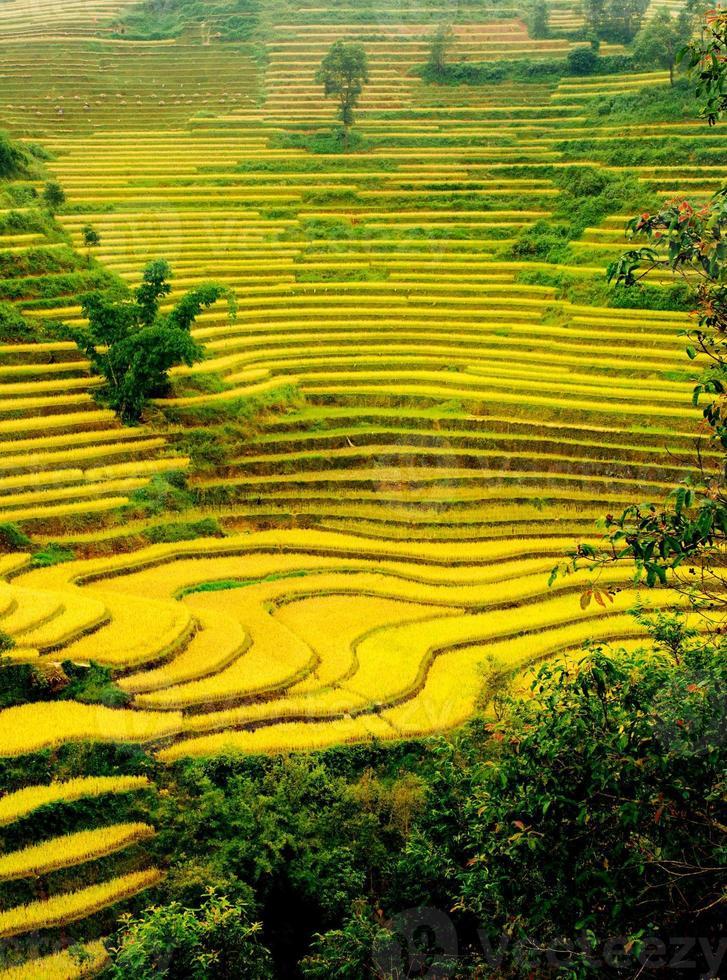 Rice fields on terraced of Mu Cang Chai, YenBai, Vietnam. photo
