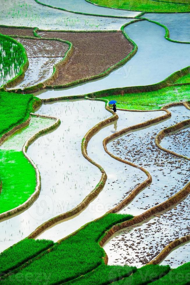 rice field on terraced in vietnam photo