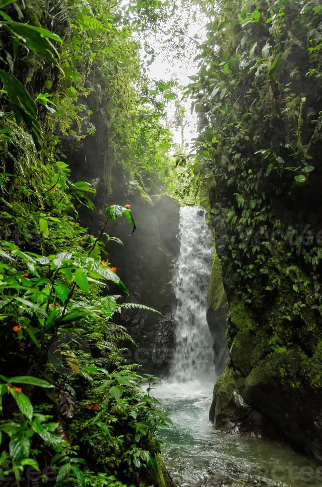 Waterfall among lush tropical foliage photo
