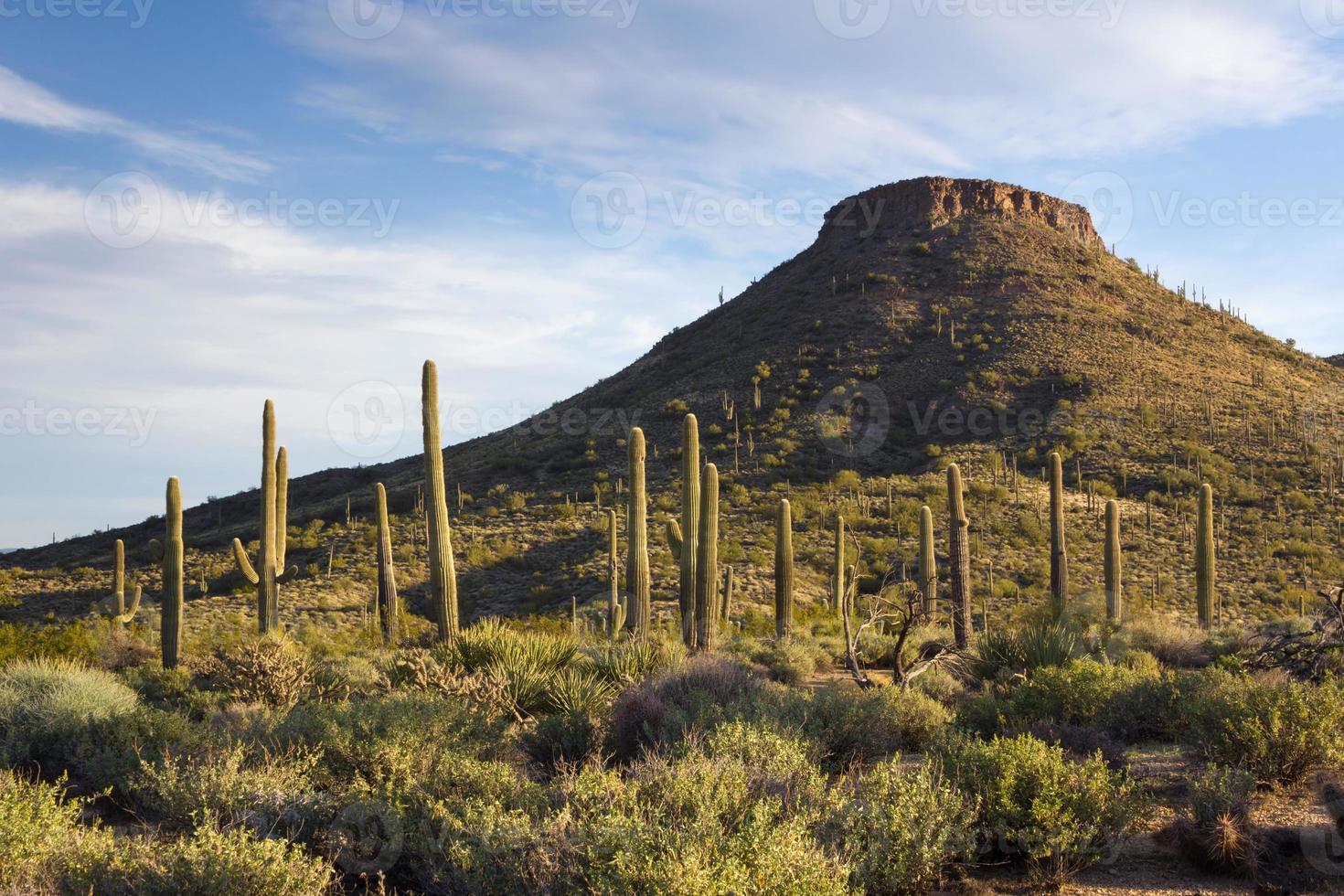 escena del desierto de la mañana en arizona foto