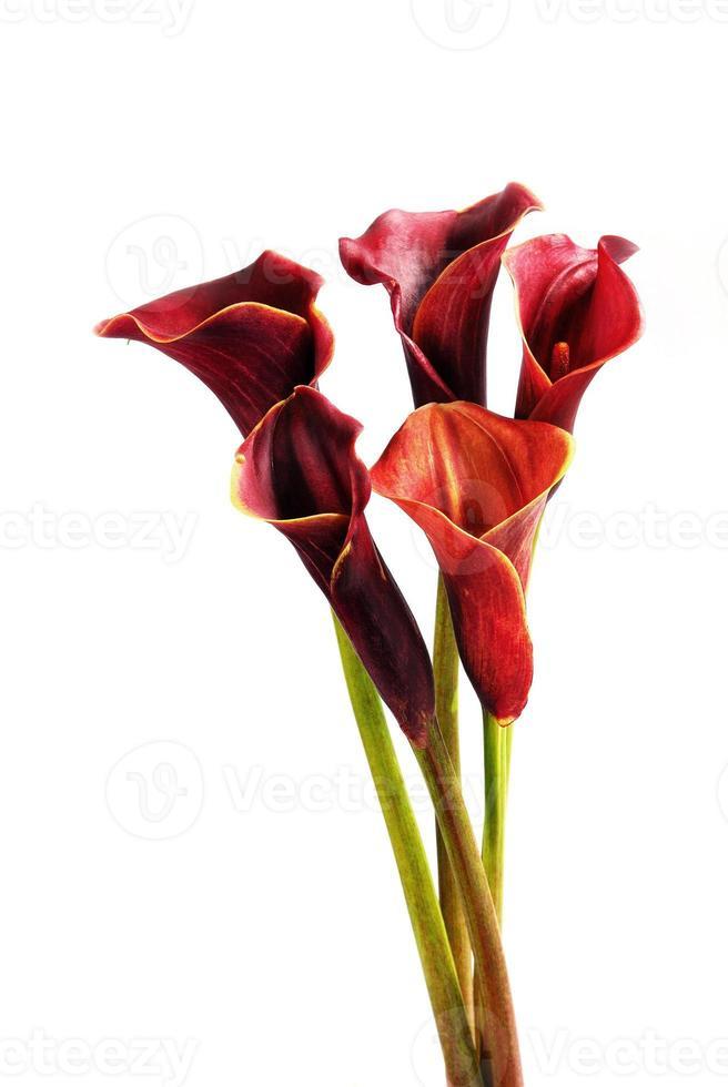 Callas photo