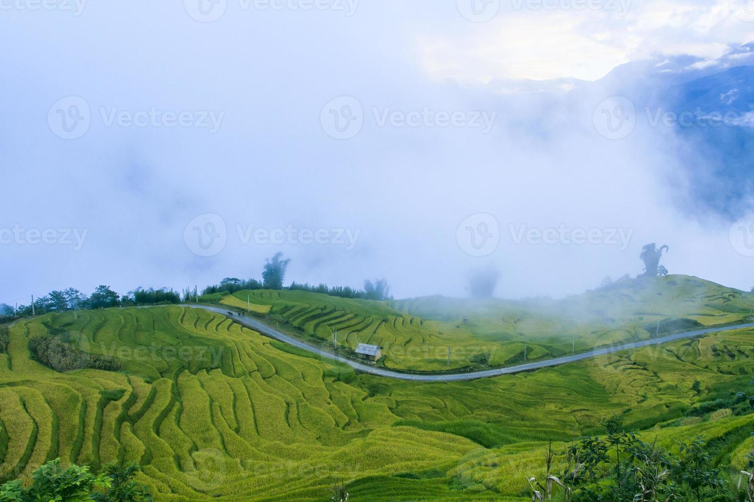 Rice filed of terraces in Y Ty photo