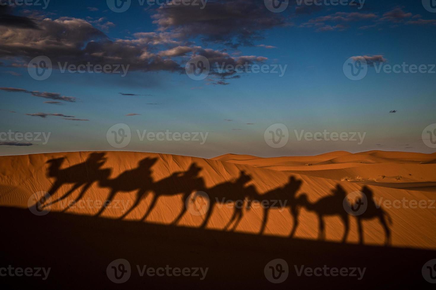 camels shadows photo